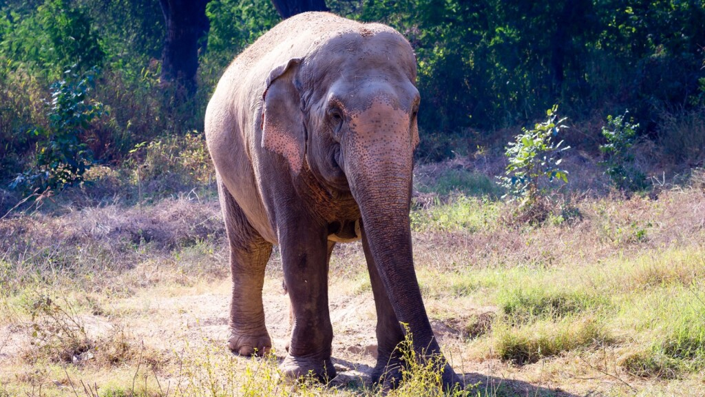 Malaysia - Jumbo exposure to exceptional fauna (credit Asian Trails)
